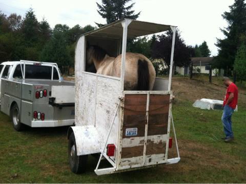 Best of Craigslist: 'One horse trailer - $500' | HORSE NATION