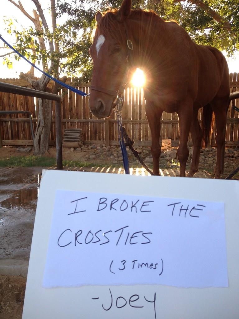 shame joey crossties