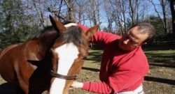 Weekend Wellness: Equine Chiropractic Work