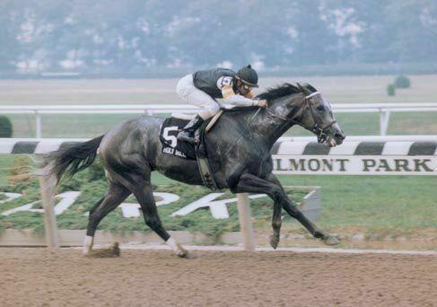 Holy Bull (photo courtesy of whitehorseproductions.com)