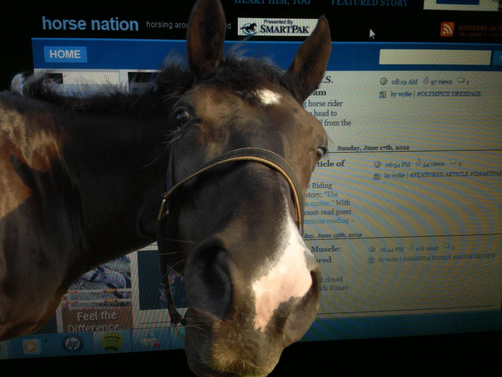 horsenation1