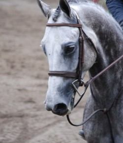 Quiz: What's Your Sporthorse Personality?