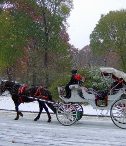 NYC Fashion Week Teams Up With Carriage Horse Campaign