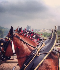 15 Budweiser Clydesdale Facts For Super Bowl Sunday