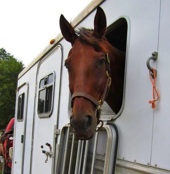 Rules Of The Road Equine Law Hauling Horse Nation