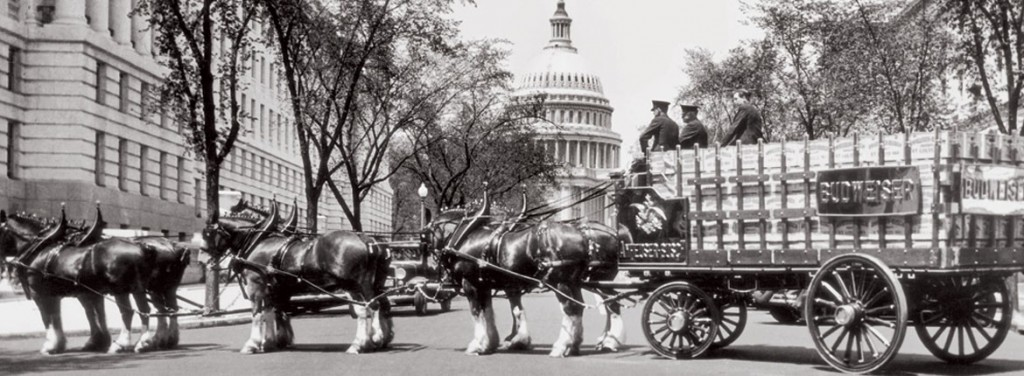 Clydesdales-3