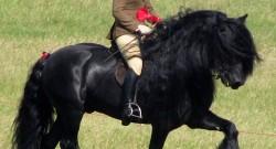 Top 10 Endangered Horse Breeds
