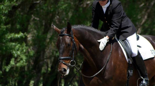Ask the Equishrink: Why Sports Psychology for Equestrians?