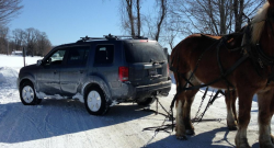 7 Times Draft Horses Saved Us From Winter