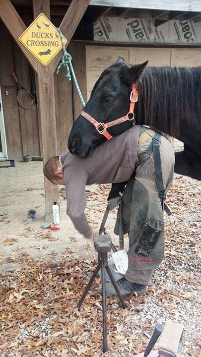 a day in the glamorous cough life of a farrier horse