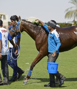 FEI Disaffiliates Endurance Races in Wake of Controversy
