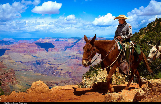 Image result for Mule Trips