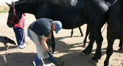 The Athletic Rider: Farrier Fitness, Part IV