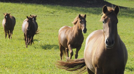 Equine Smart: Turn Out For What