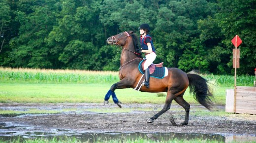 Equine Smart: Spooking By the Math