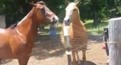 The Best $8 Spent on a Horse