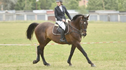 The Athletic Rider: Developing Your 'Canter Fitness'