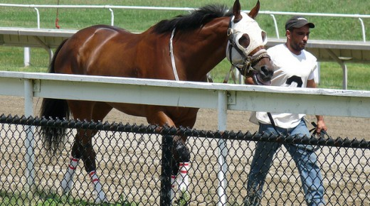Equine Law: Liability & Employment