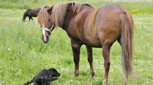 Equine Law: Dogs and Horses