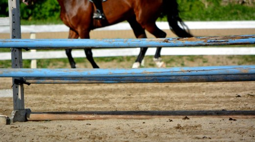 Shopping For a New Horse? Read This First