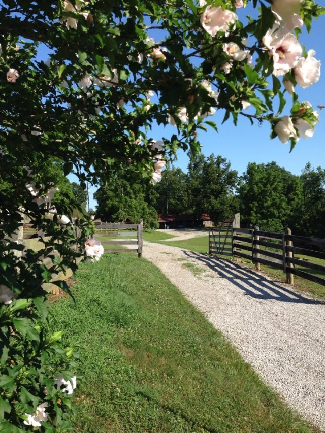 farm essay contest