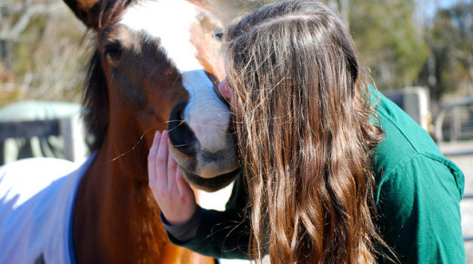 Equine Law: 'Buying & Selling,' Equestrian Edition