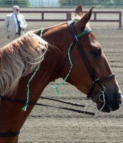 Equine Law: 2015 Legislative Update