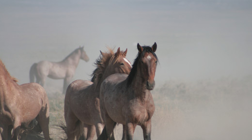 BLM to Build Largest U.S. Wild Horse Containment Center in Nevada
