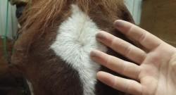 Natural Horsekeeping: Is My Horse Healthy?