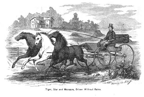 Rockwell's bridleless three-abreast. Illustration from The Improved and Practical System of Educating the Horse.