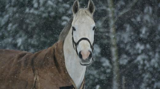 Natural Horsekeeping: A Practical Look at Blanketing