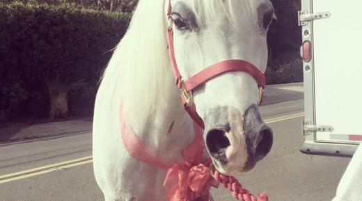 Lady Gaga Got a White Horse for Christmas