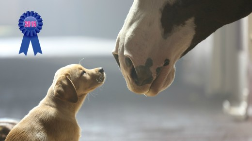 HN Best of 2015 #9: The 2015 Budweiser Super Bowl Ad Will Make You Weep Happy Tears (As Usual)
