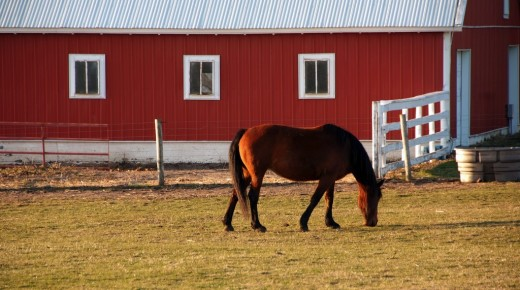 Equine Law: Basic Wills for Horse People