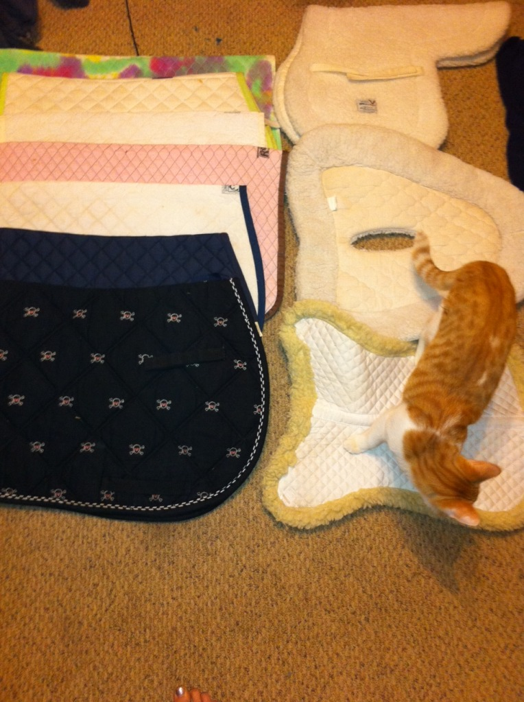 Even the cat agrees. you don't need this many saddle pads.