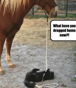 #ThrowbackThursday: 5 Alternate Uses For Barn Cats