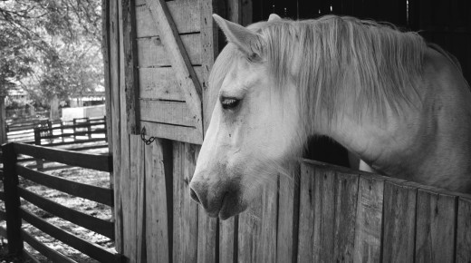 Equine Law: Horses & Divorce