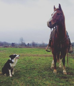 #TBT: Owning a Barn Dog vs. Owning a House Dog