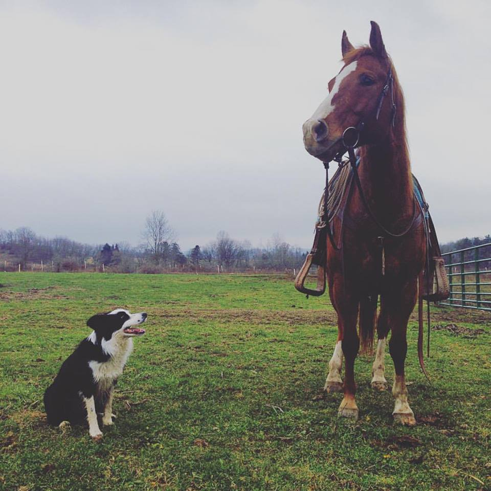 Sage, the official barn dog of Horse Nation. Photo by Kristen Kovatch.