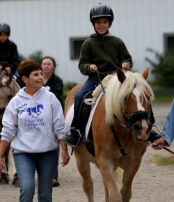 Equine Law: Considerations Before Starting an Equine Therapy Program