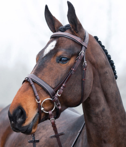 Product Review: The Horze Venice Bridle