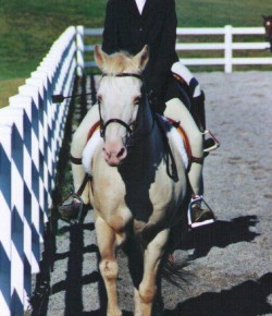 Enter Our International Lesson Horse Day Essay Contest!