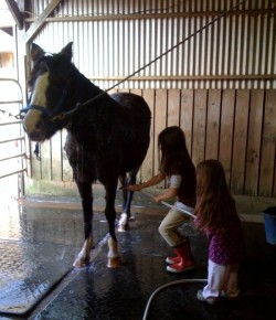 HN Staff Reflect on International Lesson Horse Day