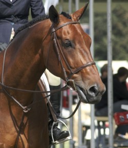 Equine Law: Presenting the Liability Release
