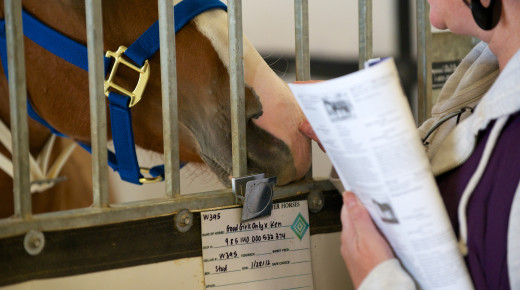 Equine Law: Sales Agreements for Special Cases