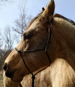 Horse Nation DIY with DMVentions: Breakaway Rope Halters & Quick-Release Knots