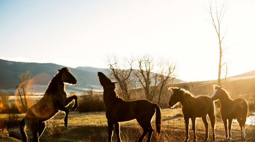 #TBT: Big Sky Country: A Montana Horsemanship Photo Essay by Tracey Buyce