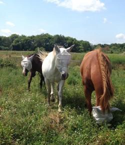 #TBT: 7 Ways Equestrians Know It's Summer