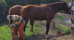 National Farriers Week: Horse Kicks 101