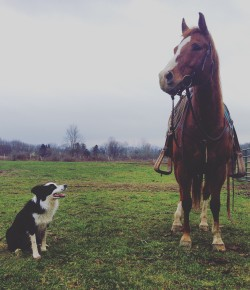 The 10 Commandments of Being a Barn Dog